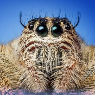 Из яда пауков хотят получить биоинсектициды быстрого действия