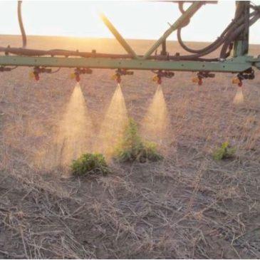 Потери урожая пшеницы в АПК без пестицидов могут составить 19% и 42% по картофелю