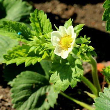 Как растения запоминают пережитые экстремальные условия для адаптации к ним