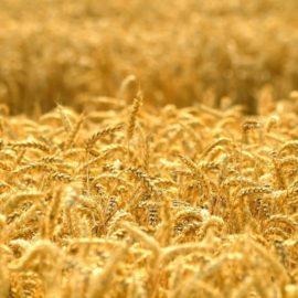 Председатель ВТБ обратился к Владимиру Путину с просьбой помочь создать нового отечественного зернового лидера
