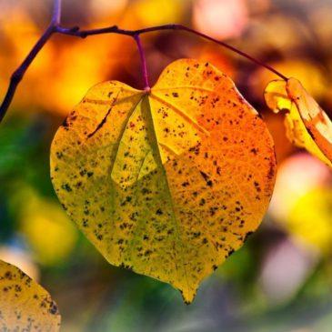 Резкое потепление идет на смену октябрьскому снегопаду в ЦФО