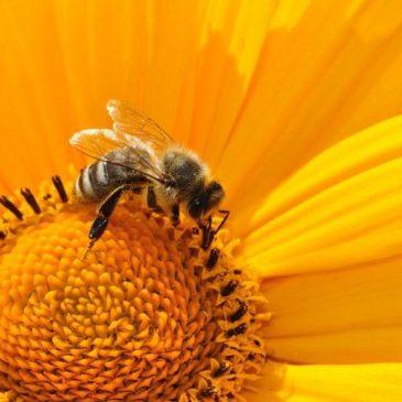 Франция запретила пестициды с сульфоксафлором со ссылкой на риск для пчел