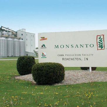 Пошли слухи о возможном банкротстве Monsanto в целях предупредить новые иски по глифосату