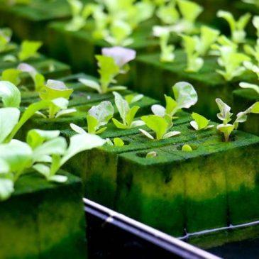 Американские производители гидропоники считают своим правом получать органический сертификат