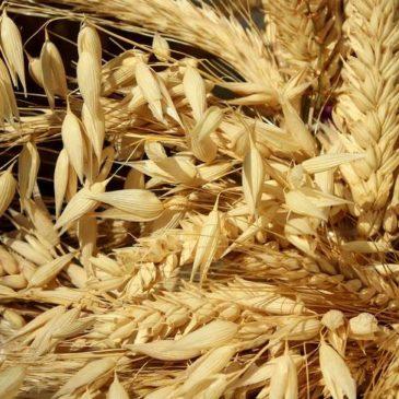 Распространение коронавируса Covid19 будет негативно влиять на мировую торговлю зерном до спада пандемии