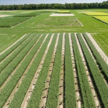 Как цифровизация АПК поможет фермерам адаптироваться к изменению климата
