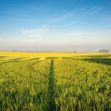 В ЕС предложили ввести новый стандарт земледелия IP + и назвали слабые стороны органик