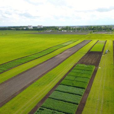Достижения отечественной селекции и семеноводства будут представлены на выставке «Всероссийский день поля»