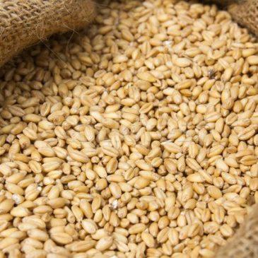 Более 960 тонн зерна поставила в Иран Астраханская область с начала года