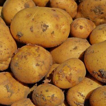 Китай намерен продавать в этом году много картофеля – и быстро
