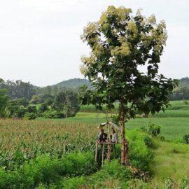 Индия собирается достичь самодостаточности по удобрениям к 2023 году