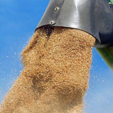 Стоимость экспорта сельхозпродукции в РФ на конец 2020 года ожидается на уровне 27-28 млрд долларов США