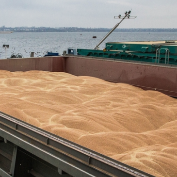 ИКАР снизил прогноз экспорта пшеницы из РФ в этом сельхозгоду сразу на 2,5 млн т