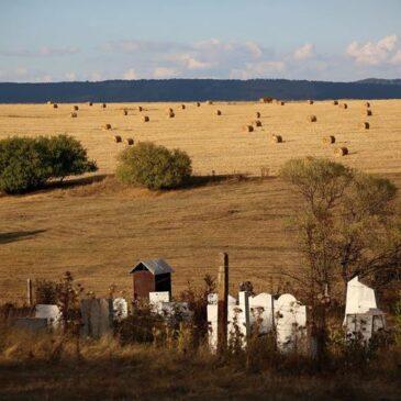 Болгарию завалило поддельными пестицидами