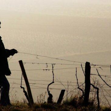 1 млрд евро направляет Франция пострадавшим от заморозков хозяйствам