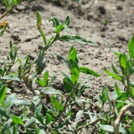 Куда ведет европейских фермеров чрезмерная экологизация