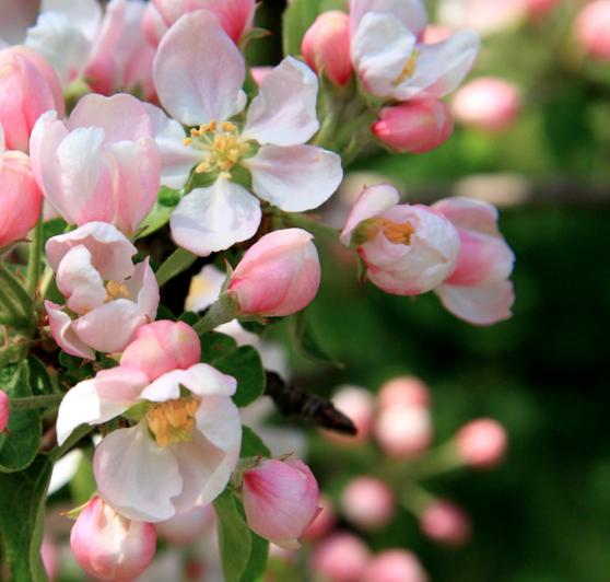 Средства защиты растений на основе Тиаклоприда: используем с осторожностью!