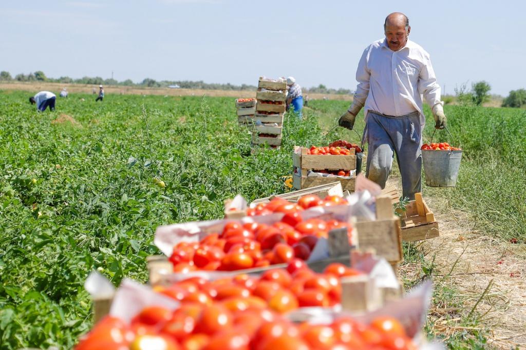 Дагестан демонстрирует положительную динамику темпов сельскохозяйственного производства