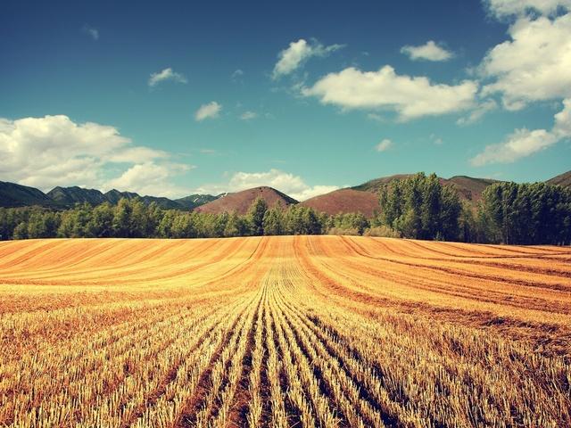 В России будут развивать кредитование под залог сельхозземель