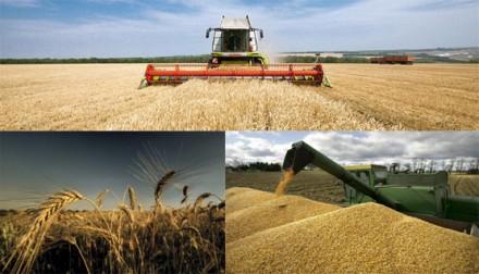 Европейцы активно обсуждают захват Россией мирового рынка зерновых