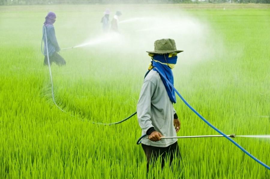 Топ самых востребованных пестицидов в Китае