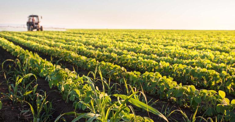 Monsanto возмущена отказом суда разрешить использование Дикамбы в Арканзасе