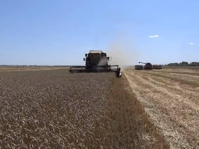 Иран войдет в ТОП-10 покупателей российской пшеницы
