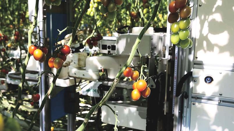 «Умные» роботы для сбора томатов тестируются в Японии