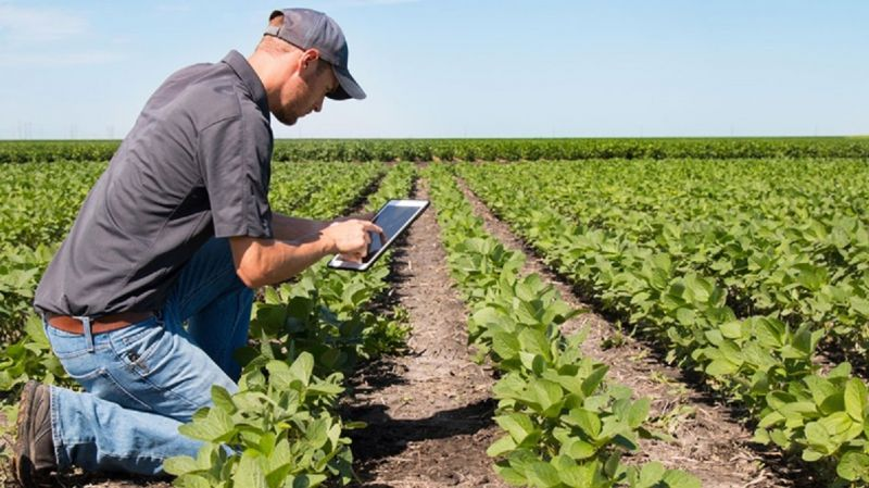 Американские исследователи призывают к крупномасштабным исследованиям применения пестицидов