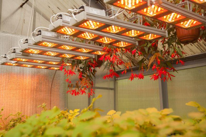 В Тимирязевской академии исследуют светодиоидное освещение в теплицах