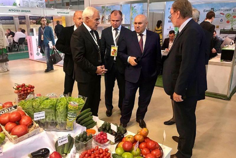 Сколько еще теплиц в России надо построить для полного самообеспечения овощами