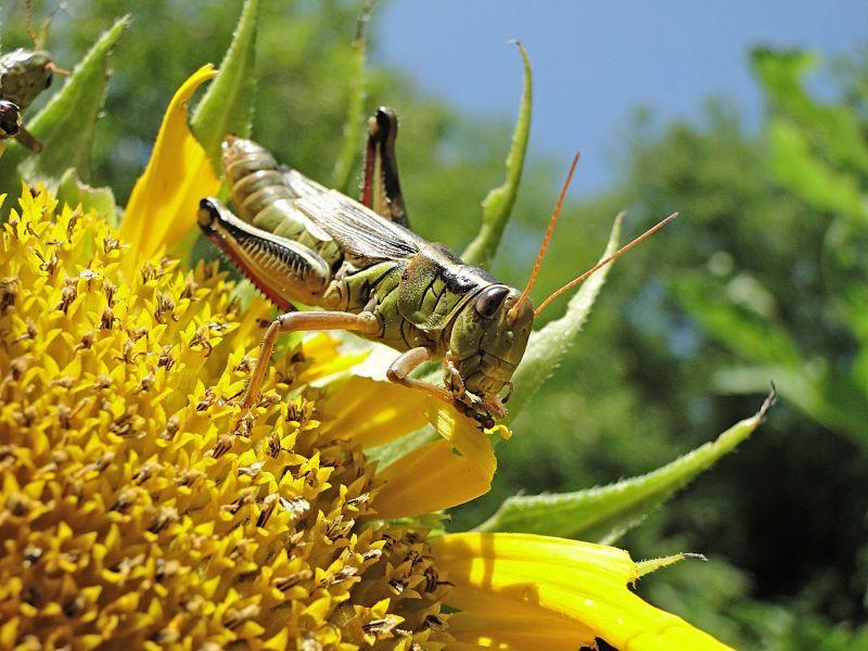Глобальное потепление привет к катастрофическому размножению насекомых вредителей