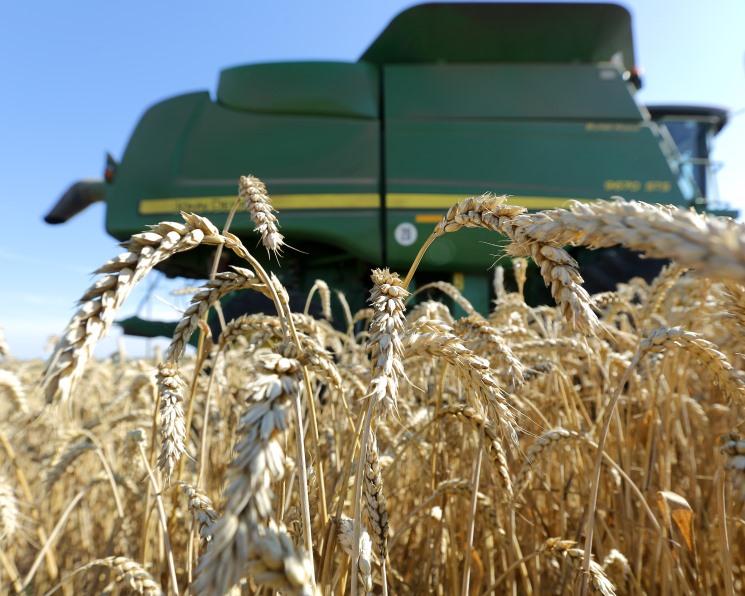 Экспортные цены на пшеницу возобновили рост