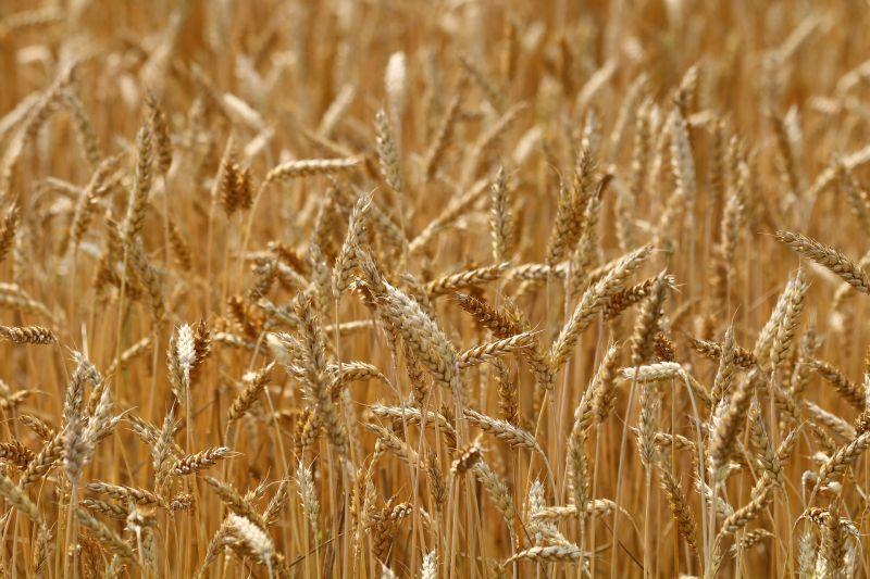 Медь в питании растений – ключ к 7-кратному увеличению урожайности