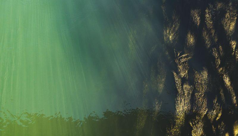 Биостимуляторы на основе экстракта морских водорослей могут сэкономить потребление воды и удобрений в садоводстве