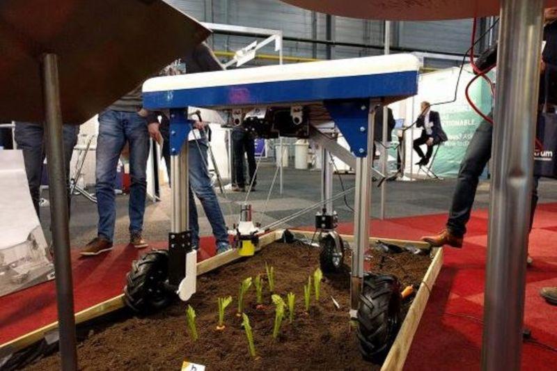 Первые роботы по прополке для индустрии органик выйдут на рынок в течение 10 лет