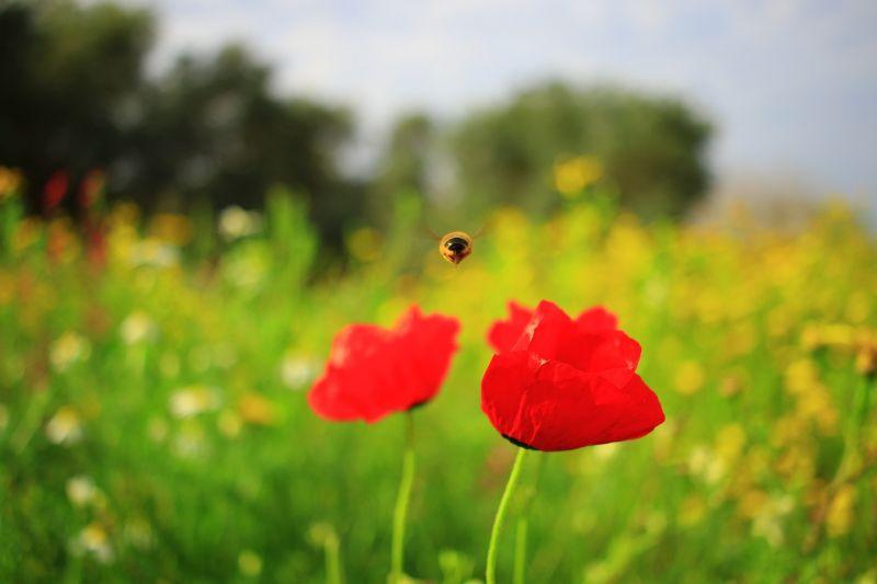 Правила биоразнообразия ударят по пестицидам в Германии