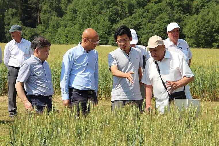Китайские ученые приехали в «Немчиновку» для обмена опытом в селекции зерновых